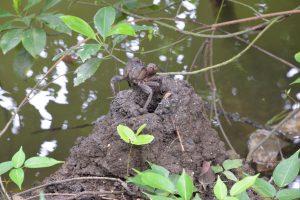 Sungei Buloh Wetland Reserve